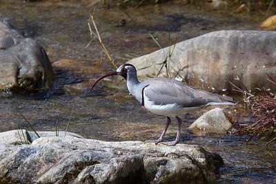 Bhutan Birds
