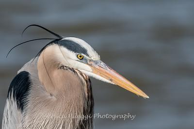 Virginia-Birds-24-27-March-2017-1239