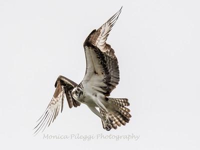 Virginia-Birds-24-27-March-2017-1584
