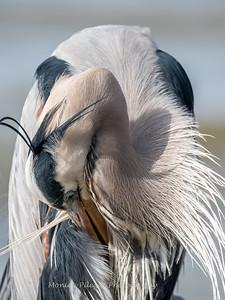 Virginia-Birds-24-27-March-2017-1278