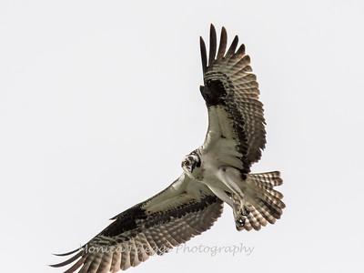 Virginia-Birds-24-27-March-2017-1583