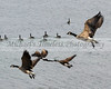 Flying Geese - 8 x 10