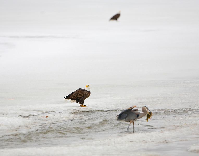 Farmington Bay Feb 08