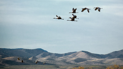 Bosque del Apache Wildlife Refuge, New Mexico 2020 11