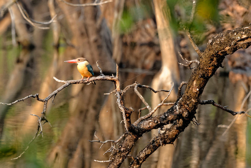 Birds and wild life in India.