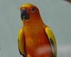 Parrot Jungle Island - Miami, FL  (April 23, 2004)