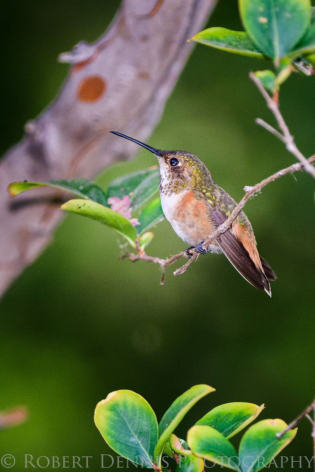 Hummingbirds in backyard