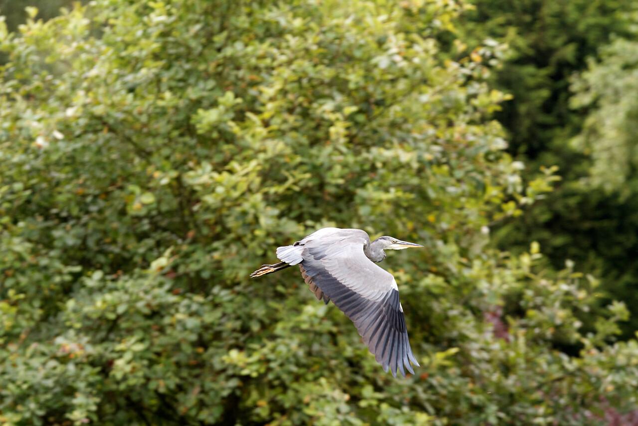 heron, moor hall