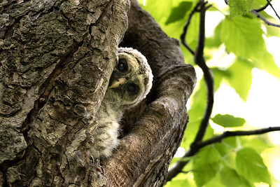 Owl See You Later