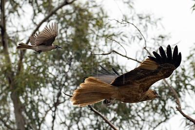 Birds-32