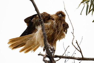 Birds-33