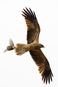Birds-30