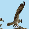 Osprey Landing Sequence