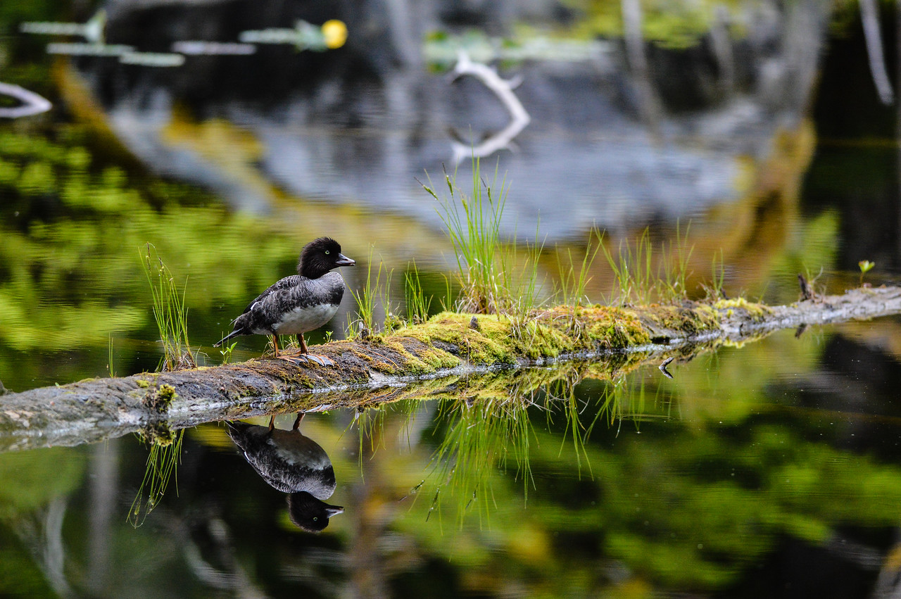 Alone on the pond