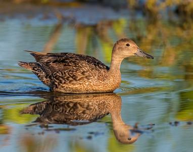 Hackberry Flats Wildlife Management Area, OK