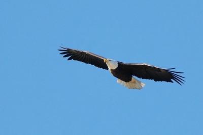 American Eagle Flyover