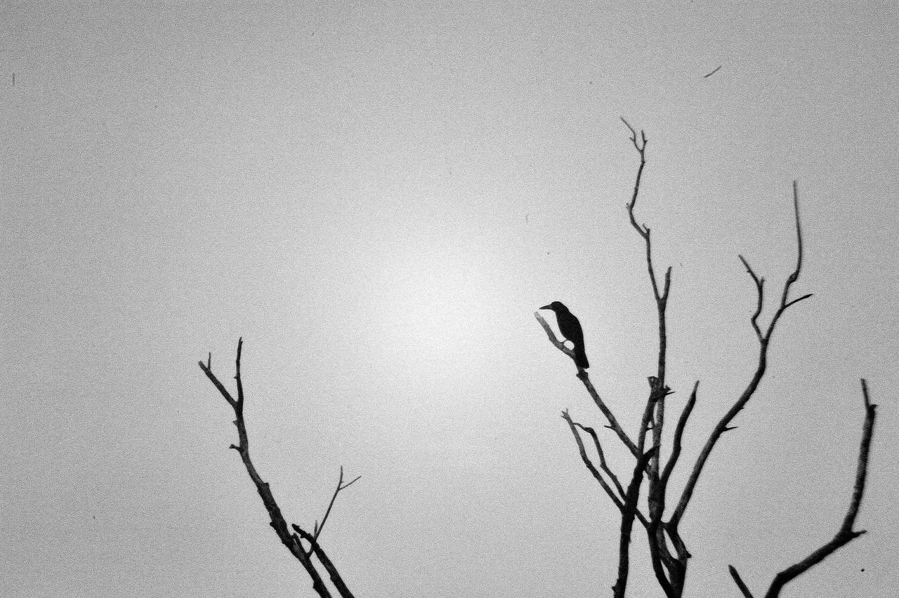 Unknown bird. Rapid Creek, Darwin, NT, Australia. July 2010