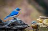 20150302 Backyard wildlife D4s 0011
