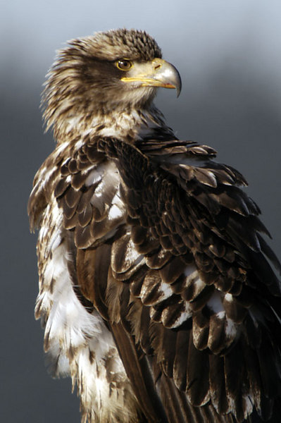 5592 Eagle