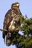 6126 Eagle