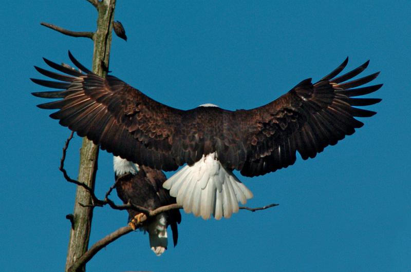 6157 Eagle landing