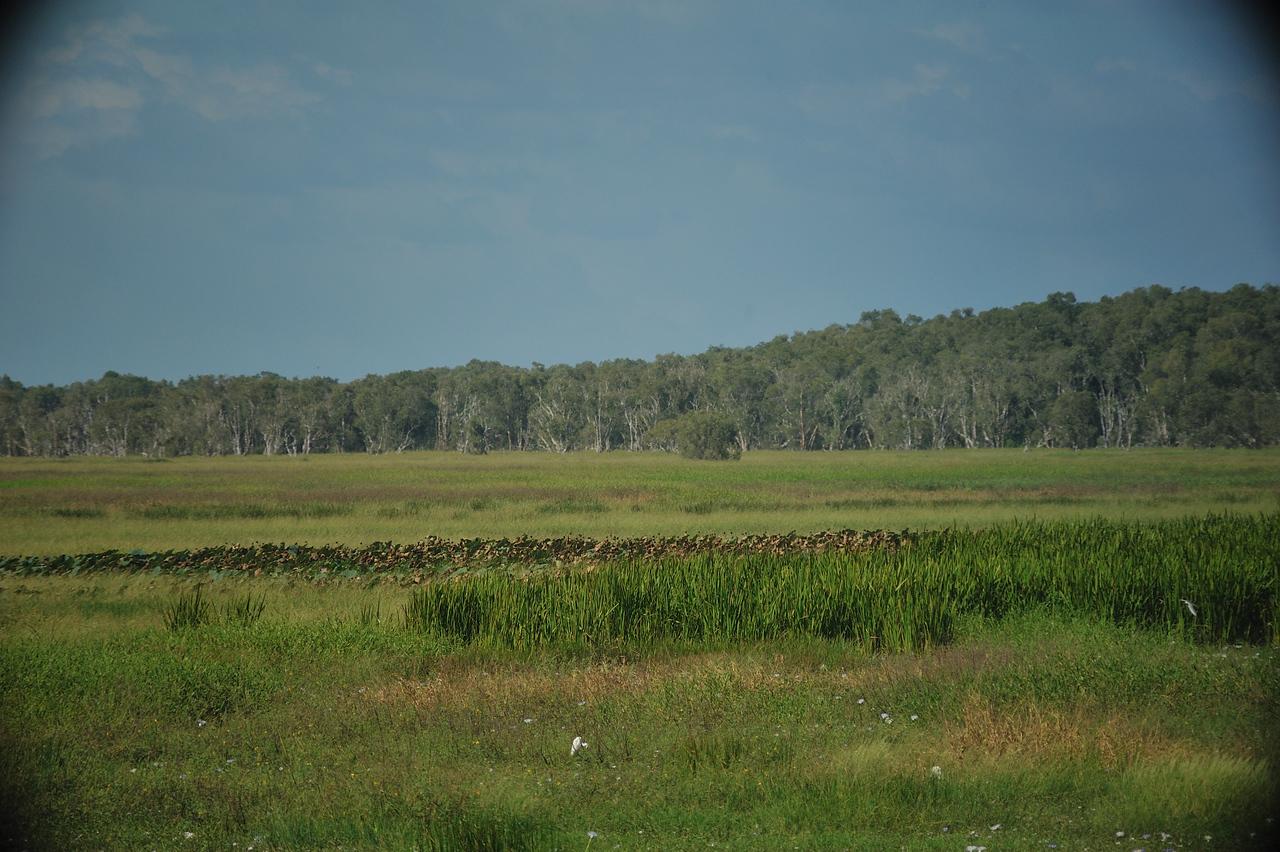 Fogg Dam Conservation Reserve, NT, Australia. May 2010