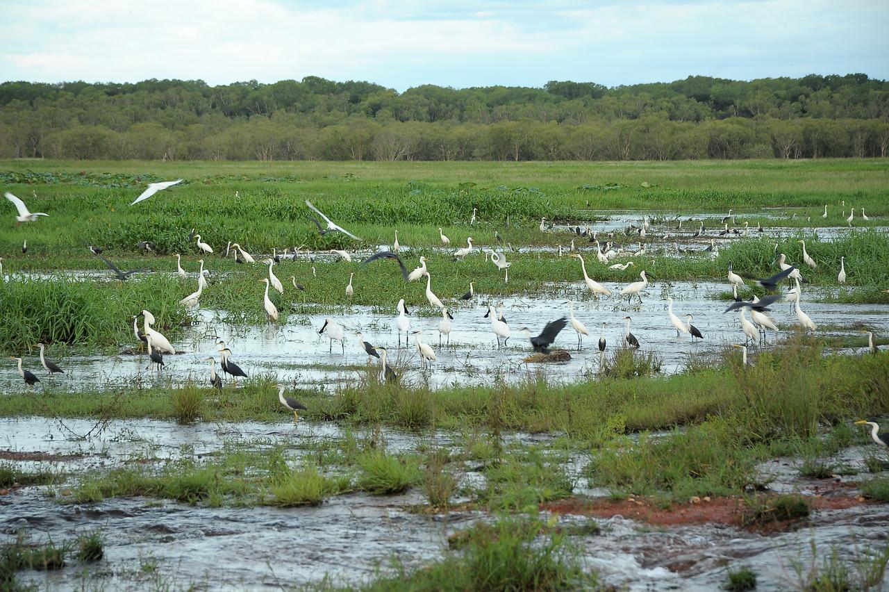 Fogg Dam Conservation Reserve, NT, Australia. March 2011