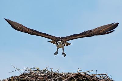 Osprey liftoff
