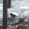 cardinal 2-23-140014