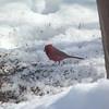 cardinal 2-23-140005
