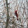 cardinal 2-26-150021