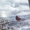 cardinal 2-23-140007
