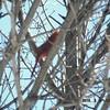 cardinal 2-26-150022