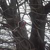 cardinal 3-23-140003