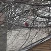 cardinal 3-23-140001