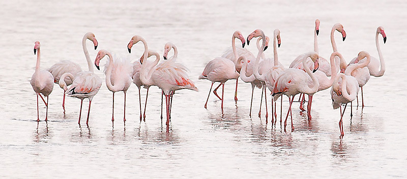 Flamingos High Key