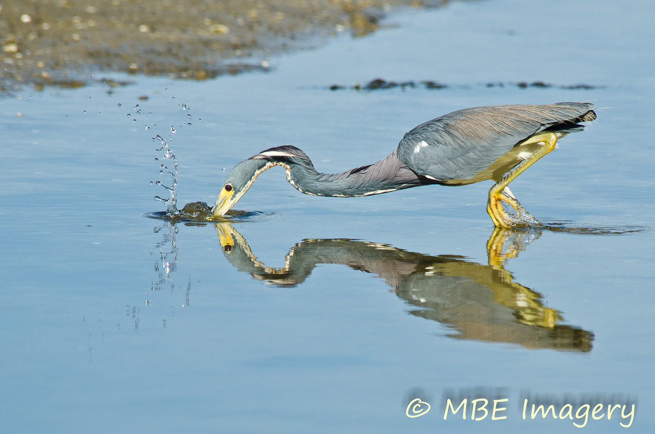 Heron dining