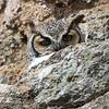 Owl Blink