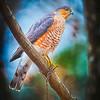 20131213-Backyard Wildlife Birds D800e-0008_HDR_1