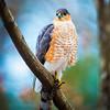 20131213-Backyard Wildlife Birds D800e-0004