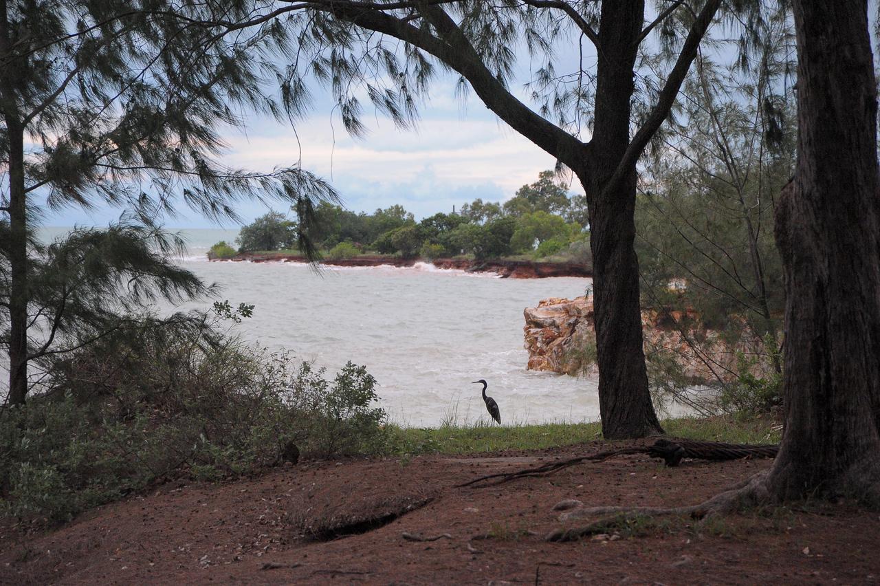 Egretta. Fannie Bay, Darwin, NT, Australia. December 2011