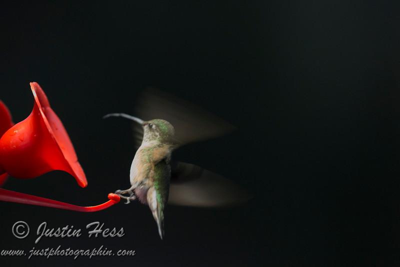 Hummingbird Liftoff