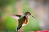 20131207-Backyard Wildlife Birds D800e-0001
