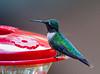 2011-08-19th Birds-98