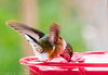 20131207-Backyard Wildlife Birds D800e-0003