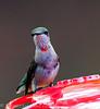 2011-08-19th Birds-83