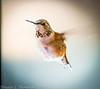 20131208-Backyard Wildlife D800e-0195