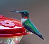 2011-08-19th Birds-96