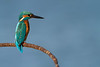 Kingfisher on its perch, made of ancient saltmarsh stories, Cadiz.