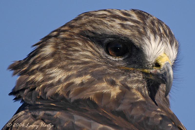 Wild bird photographed in the wild.